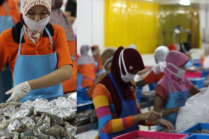 Berbagai jenis udang kualitas ekspor dibersihkan sesuai standar internasional.