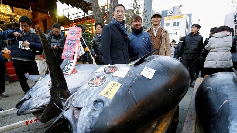 """""""Lelang terakhir di pasar ikan Tsukiji, Jepang"""". Tuna seberat 405 kg ini laku seharga 4,3 miliar rupiah (foto: news.detik.com)"""